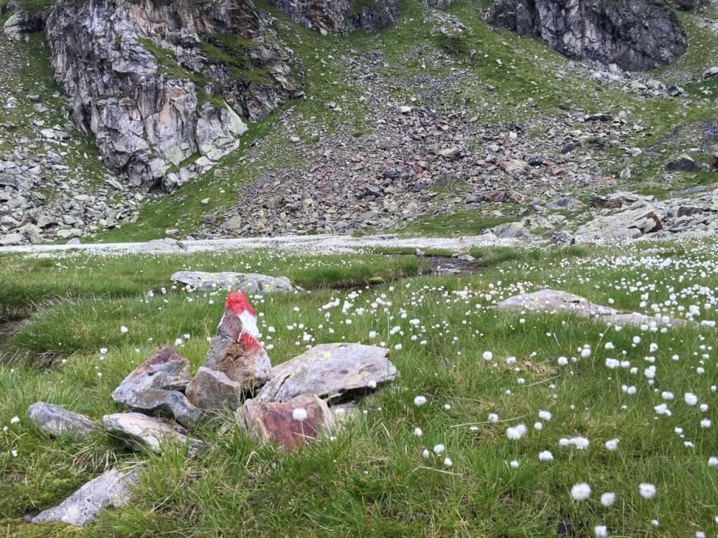 Wollgras im Wangenitztal