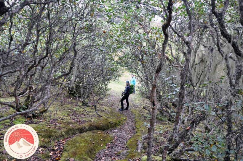 Rhododendren-Wald am Weg nach Khumjung