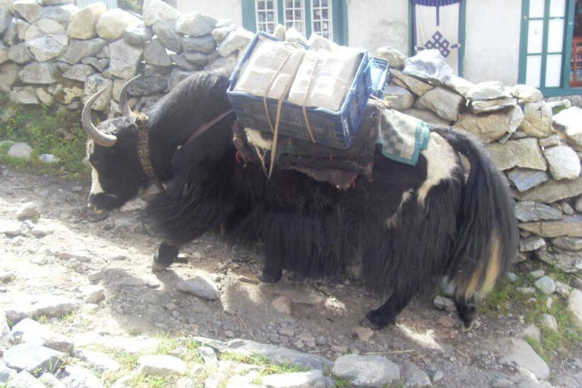 Yak Khumbu